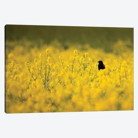 Black Bird and the Bee Canvas Print #ORI5} by David Orias Art Print