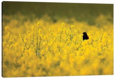 Black Bird and the Bee Canvas Art Print