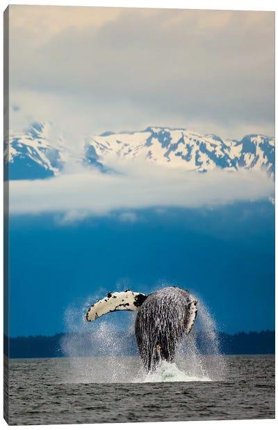 Breaching Whale in Alaska Canvas Art Print