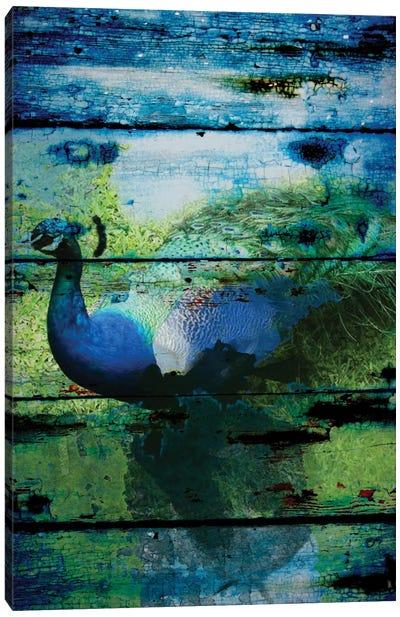 Peacock I Canvas Print #ORL105