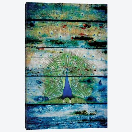Peacock II Canvas Print #ORL106} by Irena Orlov Canvas Wall Art