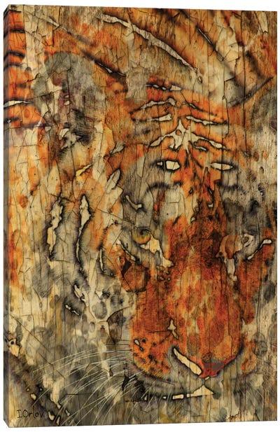 Sumatran Tiger Canvas Print #ORL112