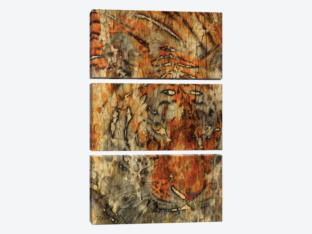 Sumatran Tiger by Irena Orlov 3-piece Art Print