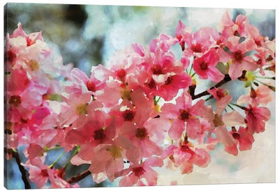 Cherry Flowers III Canvas Print #ORL126