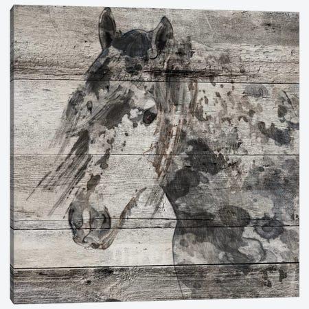 Dark Grey Horse Canvas Print #ORL128} by Irena Orlov Canvas Art Print