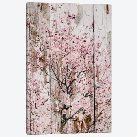 Spring Flowers II Canvas Print #ORL141} by Irena Orlov Art Print