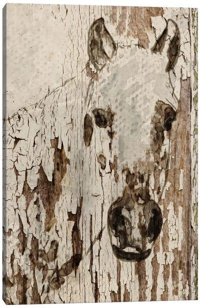 Champagne Horse Canvas Art Print