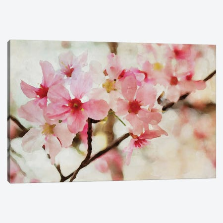 Cherry Flowers I Canvas Print #ORL15} by Irena Orlov Canvas Art