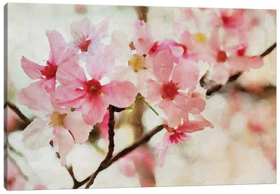 Cherry Flowers I Canvas Print #ORL15