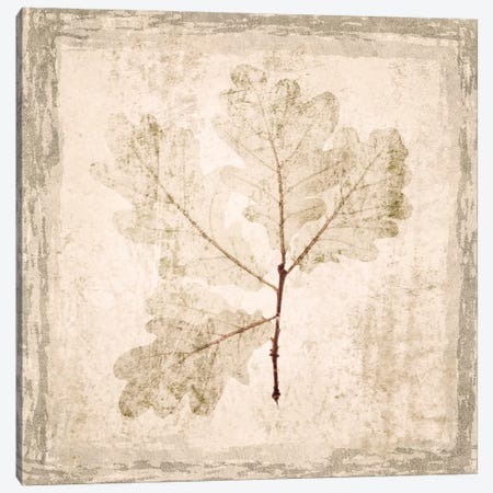 Stone Leaf III Canvas Print #ORL163} by Irena Orlov Canvas Print
