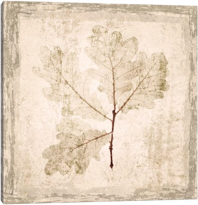 Stone Leaf III Canvas Art Print