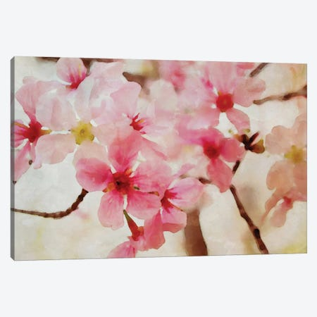Cherry Flowers II Canvas Print #ORL16} by Irena Orlov Canvas Art