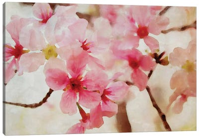 Cherry Flowers II Canvas Art Print