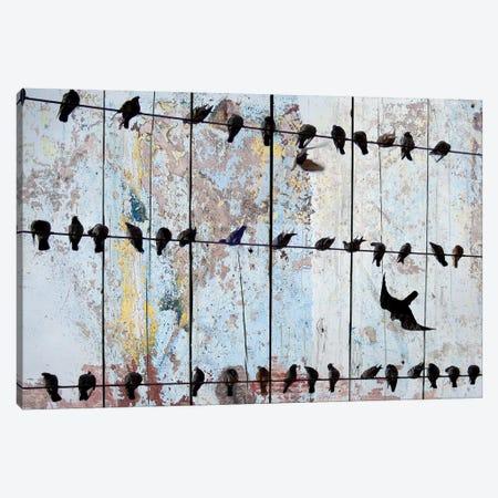 Birds on Wood IV Canvas Print #ORL174} by Irena Orlov Canvas Print