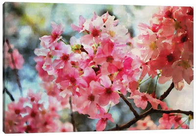 Cherry Flowers IV Canvas Print #ORL17