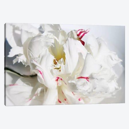 Breathless I Canvas Print #ORL184} by Irena Orlov Canvas Artwork