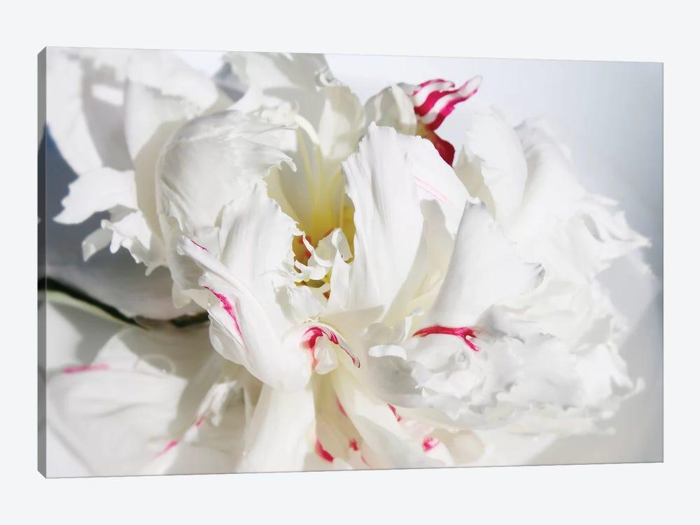 Breathless I by Irena Orlov 1-piece Canvas Art