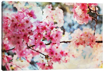Cherry Flowers V Canvas Print #ORL18