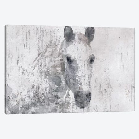 Dapple Horse I Canvas Print #ORL191} by Irena Orlov Canvas Wall Art