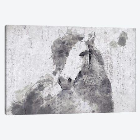 Dapple Horse II Canvas Print #ORL192} by Irena Orlov Canvas Art