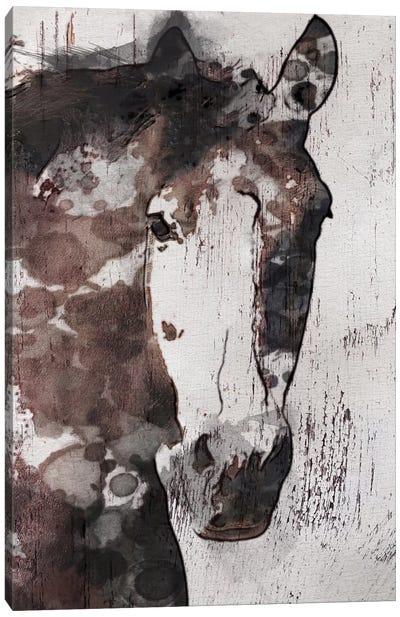 Gorgeous Horse IV Canvas Art Print