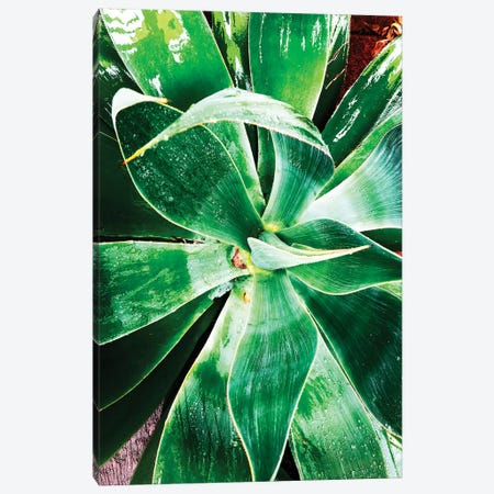 Green Tropical Succulent II Canvas Print #ORL295} by Irena Orlov Canvas Artwork