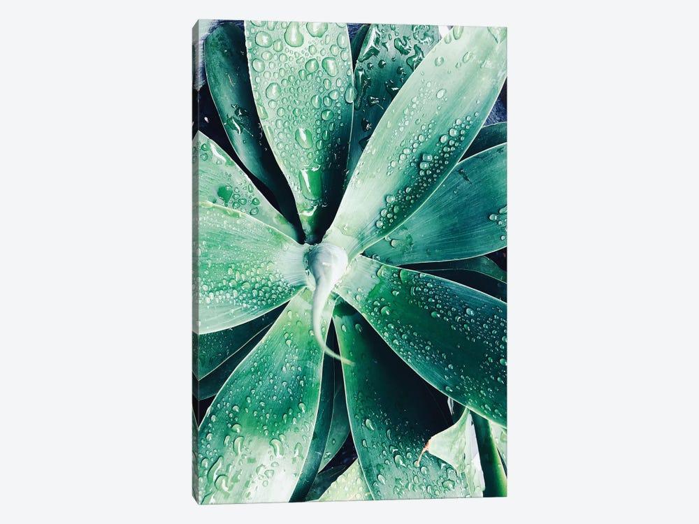Green Tropical Succulent III by Irena Orlov 1-piece Art Print