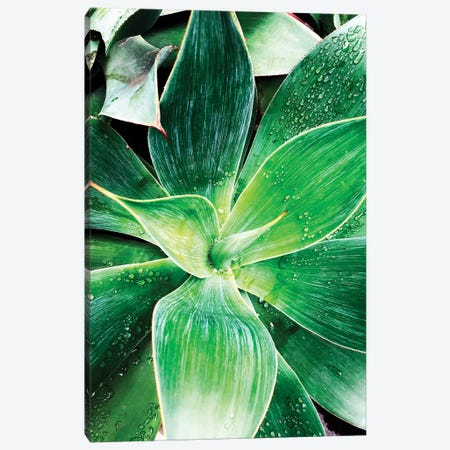 Green Tropical Succulent IV Canvas Print #ORL297} by Irena Orlov Canvas Art