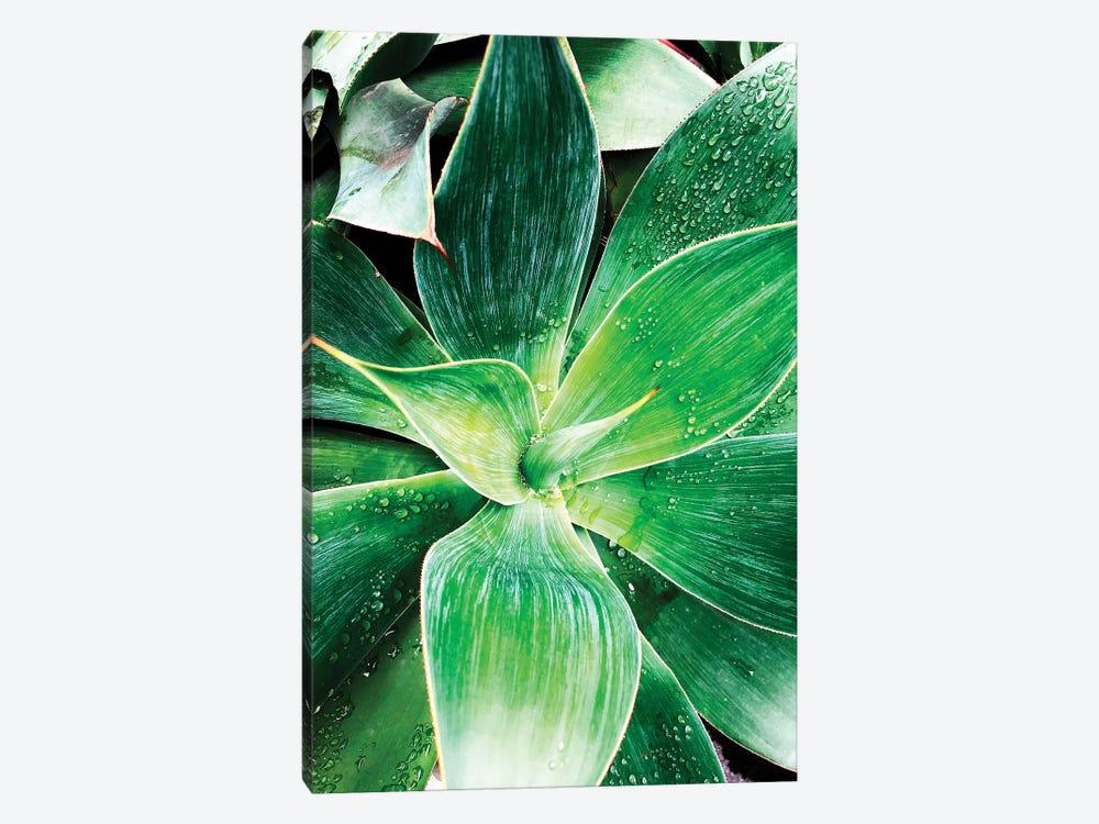Green Tropical Succulent IV by Irena Orlov 1-piece Canvas Artwork