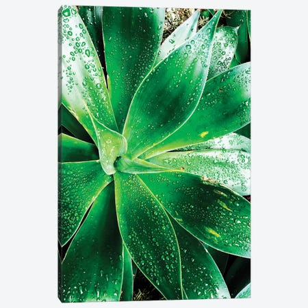 Green Tropical Succulent V 3-Piece Canvas #ORL298} by Irena Orlov Canvas Print