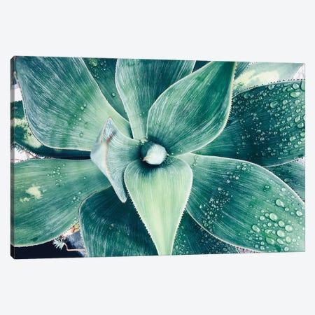 Green Tropical Succulent VIII Canvas Print #ORL301} by Irena Orlov Canvas Art Print