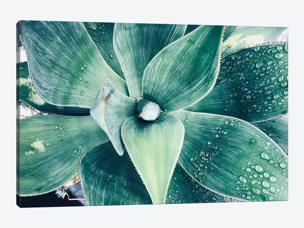 Green Tropical Succulent VIII by Irena Orlov 1-piece Canvas Wall Art