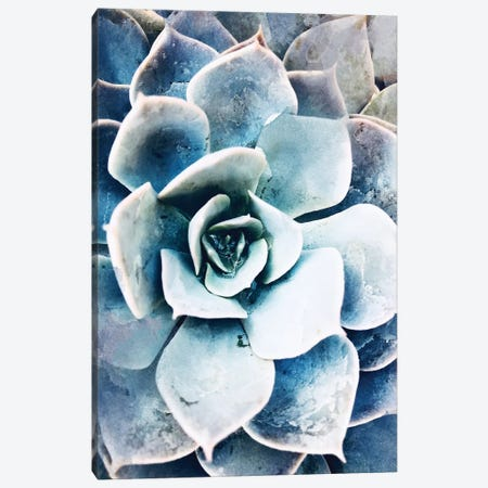 Pastel Succulent Beauty III Canvas Print #ORL304} by Irena Orlov Canvas Wall Art