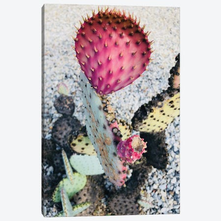 Pink Yellow Cactus I Canvas Print #ORL307} by Irena Orlov Canvas Wall Art