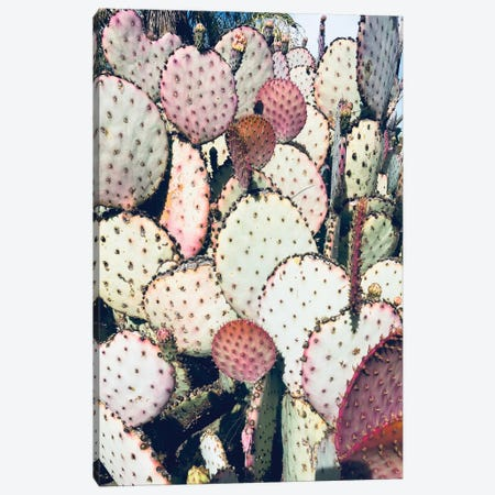 Pink Yellow Cactus IV Canvas Print #ORL309} by Irena Orlov Art Print