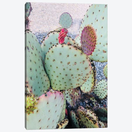 Pink Green Cactus II Canvas Print #ORL310} by Irena Orlov Canvas Art