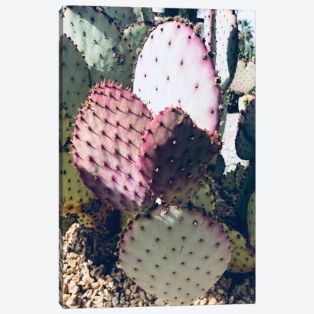 Pink Green Cactus III Canvas Print #ORL311} by Irena Orlov Canvas Artwork