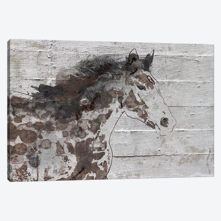 Arizona Horse Canvas Print #ORL321} by Irena Orlov Canvas Art Print