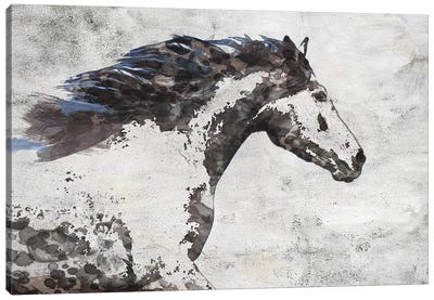 Brown Blue Majestic Horse  Canvas Art Print