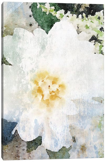Cream And White Flower Canvas Art Print