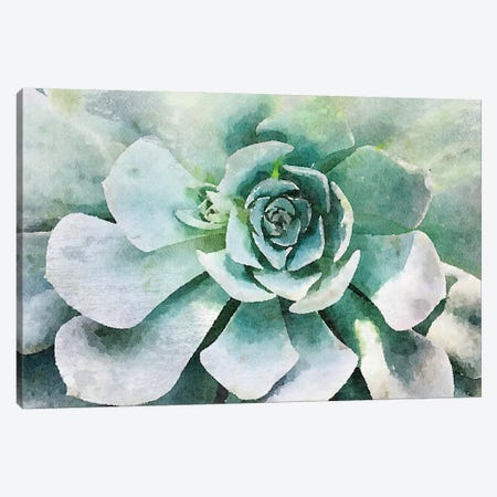 Echeveria Glauca Canvas Print #ORL338} by Irena Orlov Canvas Artwork