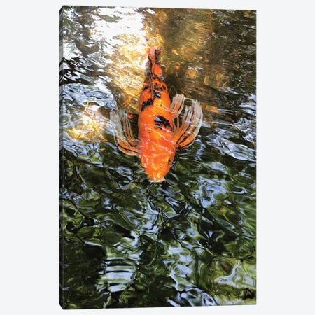 Fancy Goldfish I 3-Piece Canvas #ORL341} by Irena Orlov Canvas Print