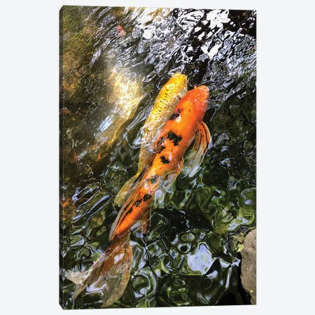 Fancy Goldfish II Canvas Print #ORL342} by Irena Orlov Canvas Art Print