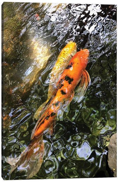 Fancy Goldfish II Canvas Art Print