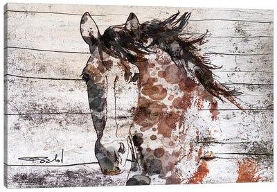 Gorgeous Bay Horse Canvas Art Print