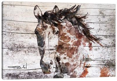 Gorgeous Bay Horse Canvas Art Print