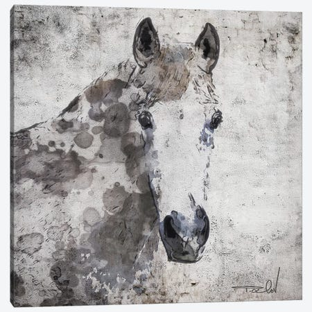 Horse Portrait Canvas Print #ORL366} by Irena Orlov Canvas Artwork