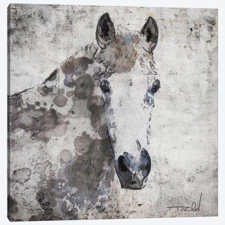 Horse Portrait Canvas Print #ORL366} by Irena Orlov Canvas Artwork
