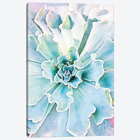 Pastel Succulent Canvas Print #ORL376} by Irena Orlov Art Print