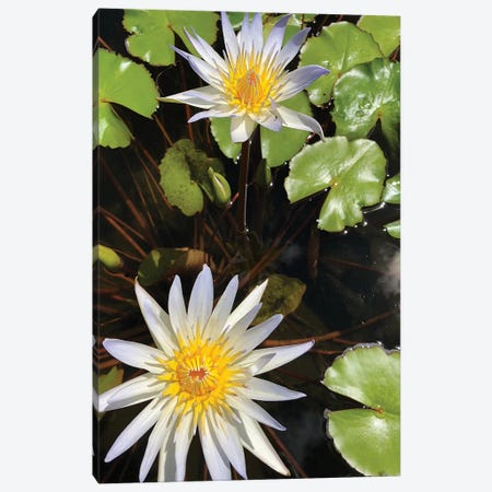 Water Lilies I Canvas Print #ORL437} by Irena Orlov Canvas Wall Art